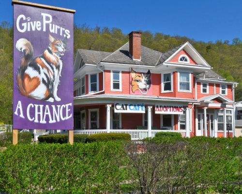 Cat Cafe in Berkeley Springs West Virginia