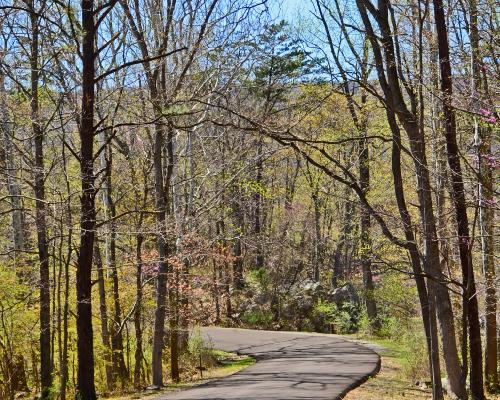 The woods in West Virgina